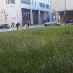 Lawn Enforcement - Uniwersytecka Wrocław